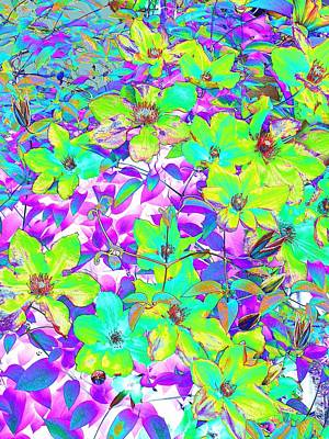 Photograph - Rainbow Clematis 2 by Lora Fisher