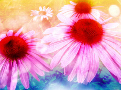 Aster Mixed Media - Rainbow Colored Coneflowers by Shawna Rowe