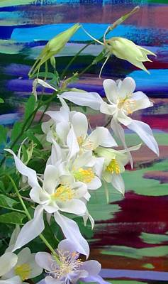 Rainbow Columbine Art Print by Brenda Pressnall
