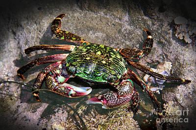 Rainbow Crab Print by Mariola Bitner