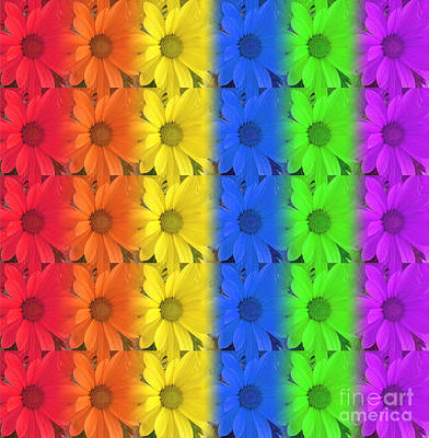 Photograph - Rainbow Daisies by Kristi Kruse