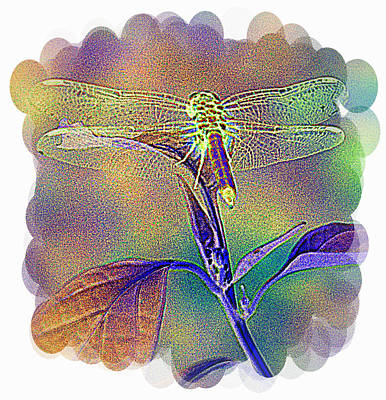Photograph - Rainbow Dragonfly 2 by Sheri McLeroy