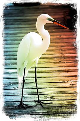 Photograph - Rainbow Egret On Pier - Digital Art by Carol Groenen