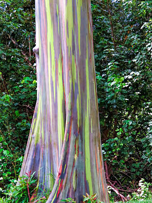 Photograph - Rainbow Eucalyptus 3 by Dawn Eshelman