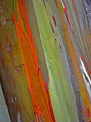 Photograph - Rainbow Eucalyptus II by Elizabeth Hoskinson