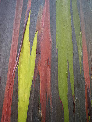 Photograph - Rainbow Eucalyptus Tree I I I by Doug Davidson