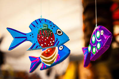 Photograph - Rainbow Fish by Melinda Ledsome