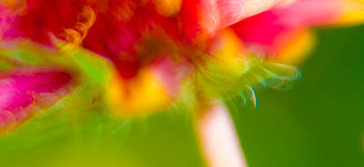 Photograph - Rainbow Flower by Darryl Dalton