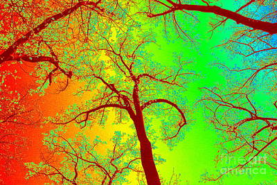 Invert Color Photograph - Rainbow Forest by Patti Whitten