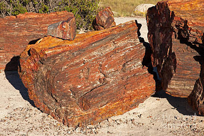Photograph - Rainbow Forest Petrified Forest National Park by Fred Stearns