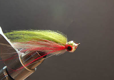 Photograph - Rainbow Fry by Philip Rispin