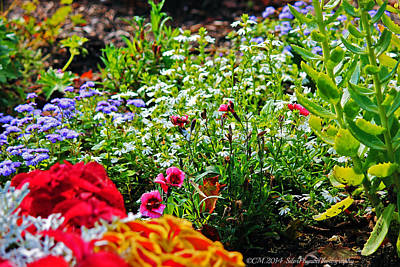 Rights Managed Images - Rainbow Garden Royalty-Free Image by Catherine Melvin
