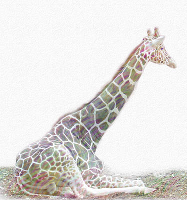 Mammals Royalty-Free and Rights-Managed Images - Rainbow Giraffe  by Cindy Angiel