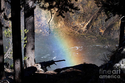 Photograph - Rainbow In The Woods by Cindy Singleton