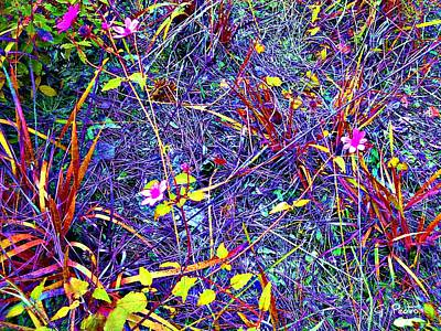 Photograph - Rainbow Jungle Wild Flower Patch by George Pedro