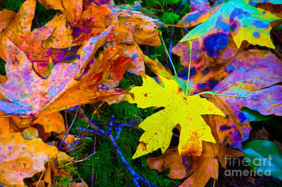 Photograph - Rainbow Leaves 2 by Adria Trail