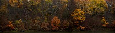 Photograph - Rainbow Leaves by Ryan Heffron