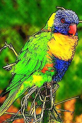 Photograph - Rainbow Lorakeet by Jodie Marie Anne Richardson Traugott          aka jm-ART