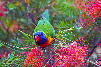 Rainbow Lorikeet I Art Print by Cassandra Buckley