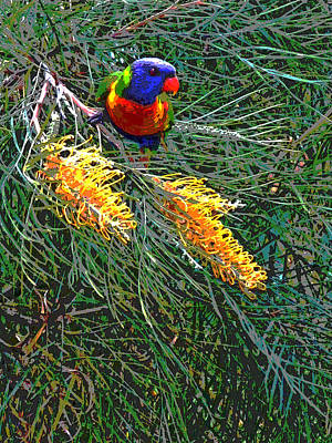 Photograph - Rainbow Lorikeet Lunch by Ankya Klay