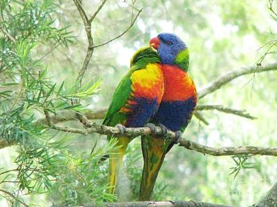 Photograph - Rainbow Lorikeets by Michele Penner