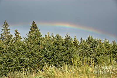 Photograph - Rainbow Over The Evergreens by Cheryl Baxter