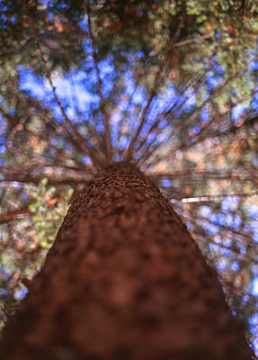 Photograph - Rainbow Pine by Aaron Aldrich