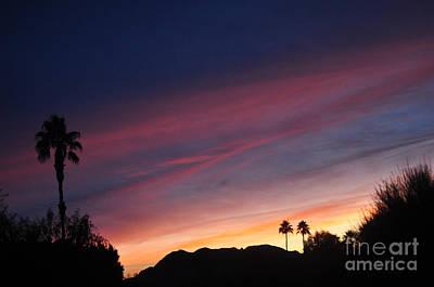 Pink Black Tree Rainbow Photograph - Rainbow Sky by Jay Milo