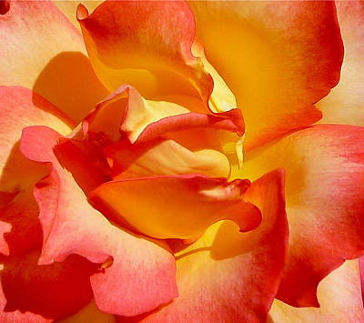 Rainbow Sorbet Rose Close Up Art Print by Denise Mazzocco