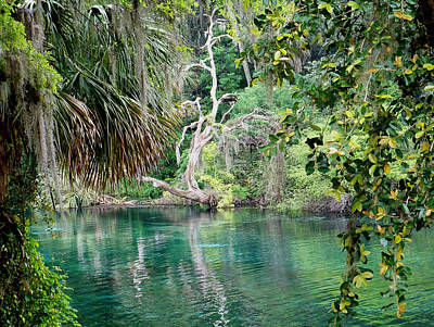 Photograph - Rainbow Springs 2 by Judy Wanamaker