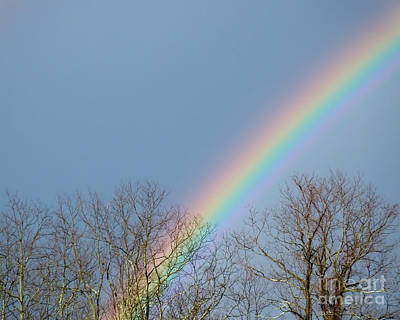 Photograph - Rainbow Through The Tree Tops by Kristen Fox