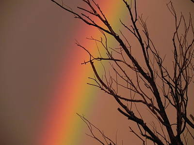 Wall Art - Photograph - Rainbow Tree by Adrienne Petterson