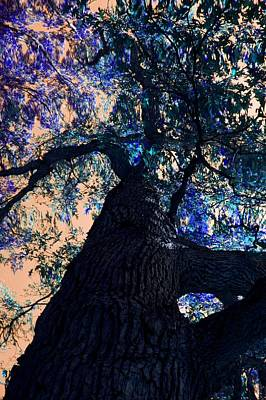 Photograph - Rainbow Tree by Sheryl Thomas
