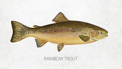 Catching Digital Art - Rainbow Trout by Aged Pixel
