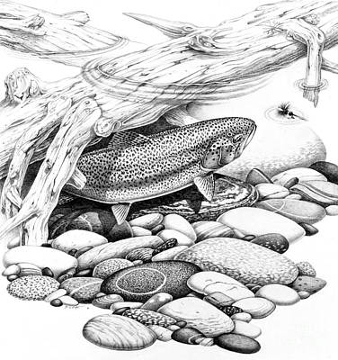 Trout Painting - Rainbow Trout Pencil Study by Jon Q Wright