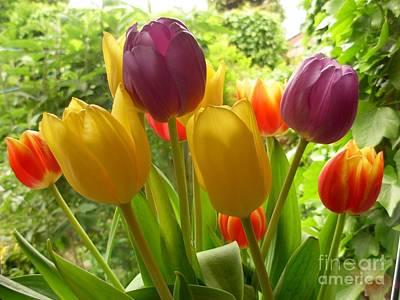 Rainbow Tulips  Art Print