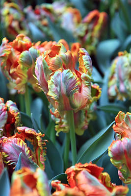Photograph - Rainbow Tulips by Pierre Leclerc Photography