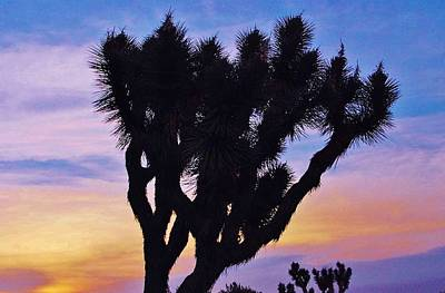Art Print featuring the photograph Rainbow Yucca by Angela J Wright