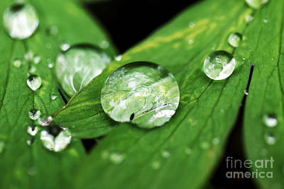 Raindrop Art Print by John Rizzuto