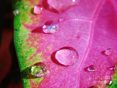 Raindrop On The Leaf Art Print by D Hackett