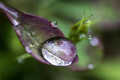 Photograph - Raindrop by Sara Hudock