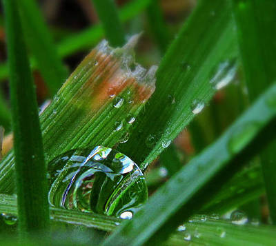 Photograph - Raindrop In The Grass by Suzy Piatt