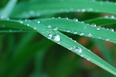 Photograph - Raindrops by Amy Porter