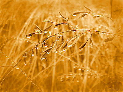 Photograph - Raindrops Falling On Golden Grasses by Jennie Marie Schell