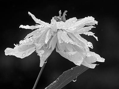 Photograph - Raindrops by Inge Riis McDonald