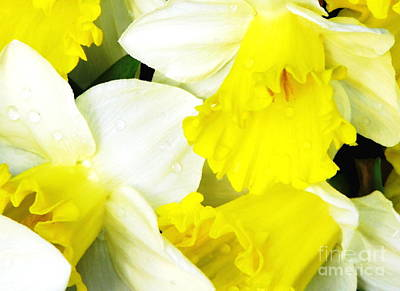 Photograph - Raindrops On Daffodils Macro With Oil Painted Effect by Rose Santuci-Sofranko
