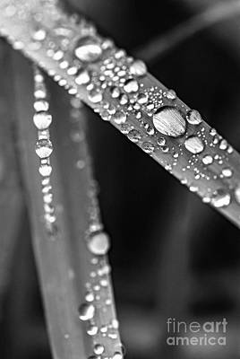 Big Meadows Photograph - Raindrops On Grass Blades by Elena Elisseeva
