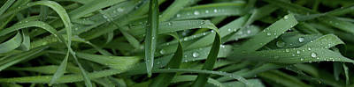 Raindrops On Grass Art Print by Panoramic Images