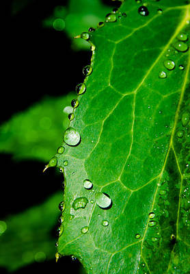 Raindrops On Green Leaf Art Print by Andreas Berthold