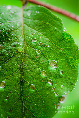 Photograph - Raindrops On Leaf by Alexander Kunz